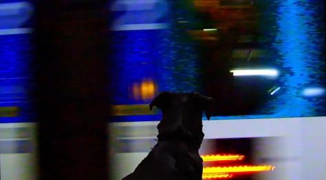 Cachorro em metro